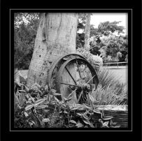 "Photograph of ""Wheel  & Tree"" (Black & White)"